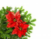 Christmas Tree Branch With Red Poinsettia Flower Over White