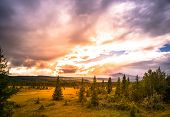Beautiful Scenery With Bog Forest And A Beautiful Sky