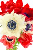 Bouquet Of Red And White Anemone Flowers