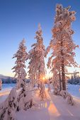 Beautiful Snow-covered Trees In The Rays Of The Rising Sun