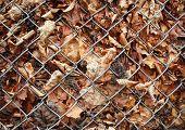 Autumn Dead Leaves Behind Metal Grid Fence