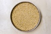 A closeup of wheat grains kept in a plate under sunlight on an isolated background