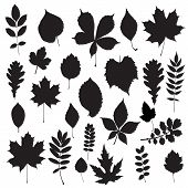 Illustration of Leaf collection - vector silhouette