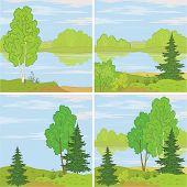 Set forest landscapes