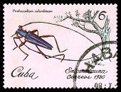 Vintage  Postage Stamp. Beetle Pinthocoelium Columbinum.
