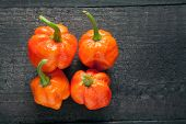 pic of scorpion  - Trinidad Moruga Scorpion Spicy chili in the world on a black background - JPG