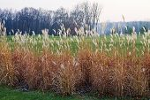 stock photo of tall grass  - landscape with autumn field with tall dry grass - JPG