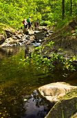 pic of wild adventure  - Wild cherry branches and rocks in water at Black river gorge trekking path - JPG