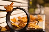 Autumn Traces