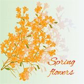 Forsythia Spring Flowers Vector