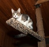 Striped And White Kitten Sitting On Scratching Posts