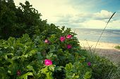 picture of hot-weather  - Sea coast in the spring in hot weather - JPG