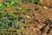foto of chameleon  - Chameleon in the wild on the island of Sri Lanka - JPG