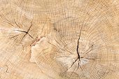 picture of cutting trees  - Texture cut - JPG