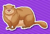 pic of beaver  - Fat beaver smiling on purple background - JPG