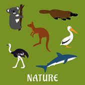 stock photo of kangaroo  - Australian native animals and birds icons in flat style with platypus - JPG