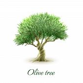 stock photo of pain-tree  - Stylized picture of beautiful evergreen olive tree grown for fruit to produce oil poster abstract vector illustration - JPG