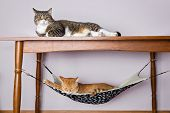 picture of upstairs  - Two domestic cat sleeping one under the table in the second hammock upstairs - JPG