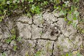 pic of drought  - Cracked earth from the intense heat - JPG