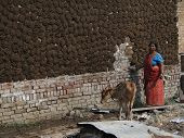 Indian Woman Puts Cow Dung Cake Patties On Wall