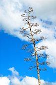 Cactusflower80
