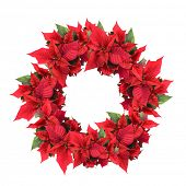 foto of christmas wreaths  - christmas wreath from poinsettia isolated on white - JPG