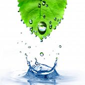 green leaf with water drops and splash isolated on white