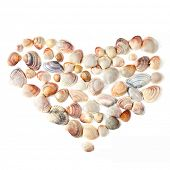 stock photo of scallop shell  - heart for valentine - JPG