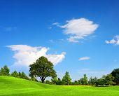 Campo verde, Primavera