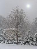 Snowstorm Sky