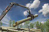 Lumber Industry - Crane Lifting Timber poster