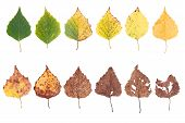 Autumn Concept, Age Changes Of Leaves, Aging Stages, The Birth Death, Drying, Time Flies poster