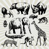 Set of Exotic Animals Hand Drawn