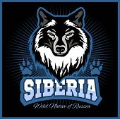 Siberian Wolf - A Wolf Head On The Black Background. Russian Siberia - Vector Emblem. Wild Nature Of poster