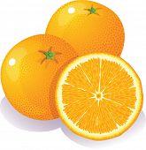 Vector illustration - Three ripe oranges