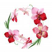 Red Orchid Vanda Flower. Floral Botanical Flower. Frame Border Ornament Square. Aquarelle Wildflower poster
