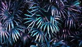 Tropical Leaf Forest Glow In The Dark Background. High Contrast. poster