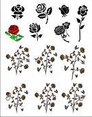 set of vector roses