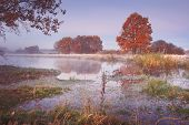 Autumn Nature Landscape. Colored Trees On River Shore In The Clear Morning. Scenic Nature In October poster