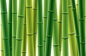 Fresh bamboo grove vector illustration.