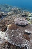 Sipadan Hard Coral