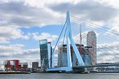Erasmus Bridge In  Rotterdam . Netherlands