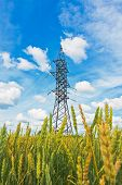 Wheat Field And Electrical Powerlines In Summer Day