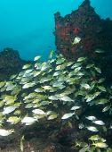 Fish on a reef ledge