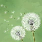 Vintage Floral Background com Dandelion