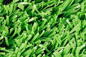 Photo of Close up of synthetic grass (Texture)