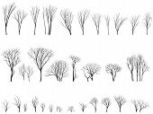 Silhouettes Of Trees And Bushes Without Leaves.