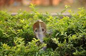 image of king cobra  - wild spectacle cobra snake in indian jungle - JPG