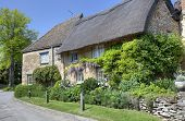 stock photo of english cottage garden  - Thatched cottage with pretty garden - JPG