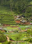 Tea Plantations And Vegetable Gardens. Sri Lanka